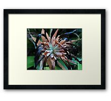 facing the art of survival... Framed Print
