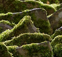 mossy rockscape by picketty