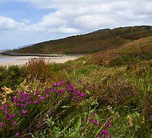 Coastal Wildflowers by picketty