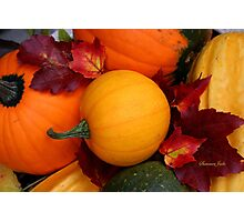 Pumpkins, Gourds and Maple Leaves Photographic Print