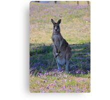 Oil brush Kangaroo Canvas Print