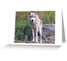 The *LUMIX* Wolf  Greeting Card