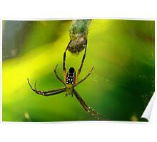 Spider - Botanical Gardens, Cairns Poster