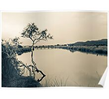 Tree in calm waters Poster