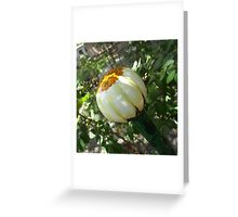 Daisy Walking Stick Greeting Card