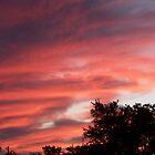 Crimson Sunset  by kentuckashee