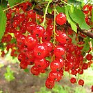 Redcurrant berries by Irina777