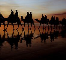 Camels at Sunset by Sue Wickham