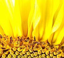 Sun Rae's  by leenicola