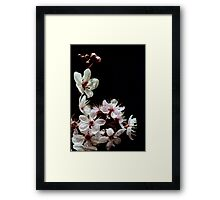 Beautiful blossoms on black Framed Print