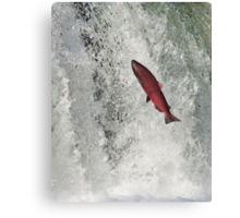 The Leaping Salmon Canvas Print