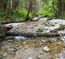 Stream in the Forest by Tim Grams