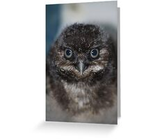 Burrowing Owlet Greeting Card