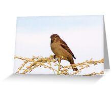 Bird on a corn stalk Greeting Card
