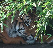 Chester Zoo by ERNEST263