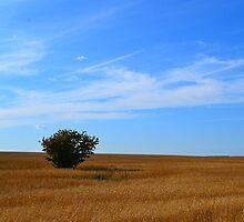 Rowan bush by Valeriy  Pisanov