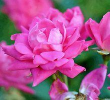 Pinky by john forrant
