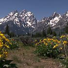 Grand Tetons - Arrow Leaf Balsomroot by Brian Harig