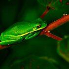 It's  So Good To Be Green by Brenda Burnett