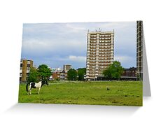 Gypsy Pony On Common Land Greeting Card