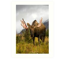 Inquisitive Moose Art Print