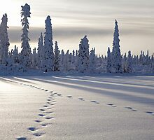 Moose Tracks on a Lake by Tim Grams