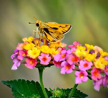 The Little Skipper  by Saija  Lehtonen