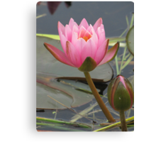 Waterlily with bud Canvas Print