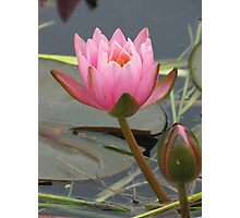 Waterlily with bud Photographic Print