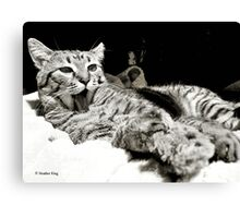 Deep Cleaning Canvas Print