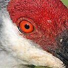 A pretty orange eye! by jozi1