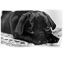 Sleepy Pug Poster