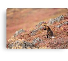 Red Fox, Red Tundra Canvas Print