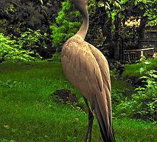 Stanley's Crane, Edinburgh Zoo by Den McKervey
