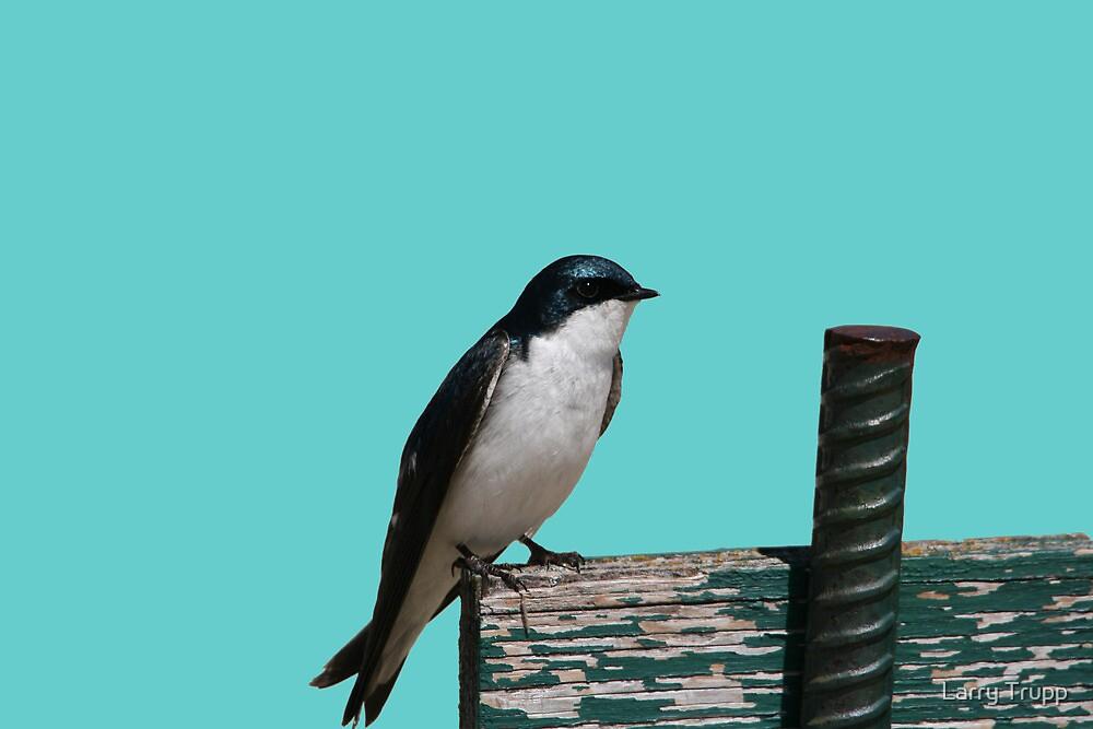 Tree Swallow by Larry Trupp