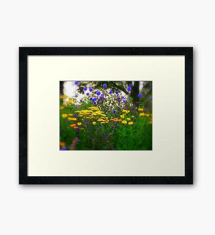 Multicoloured Flowers  Framed Print