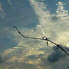 Reaching For The Sky. by dge357