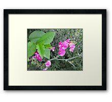 Beauty Amongst The Weeds 3 Framed Print