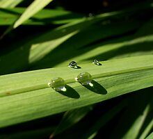 Raindrops on a green leaf by Conor Donaghy