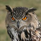 European Eagle Owl by Charlotte Yealey