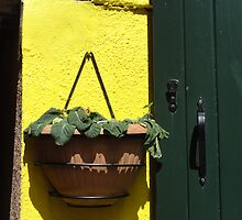 Flower pot on yellow wall with green door - Burano, Italy by tracyannjones