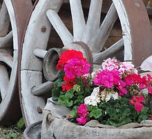 red and pink Geraniums with wagon wheels - Innsbruck, Austria by tracyannjones