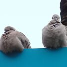 Pigeons take a rest on a sign in Monaco by tracyannjones