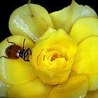 Another Lady Bug by Corri Gryting Gutzman