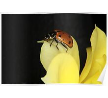 Lady Bug on a Yellow Rose Poster