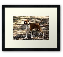 Just Rocky being Rocky Framed Print