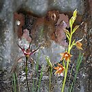 Rusty Spider & Orchids with Rusty Tin, native orchids of Australia. by Leonie Mac Lean