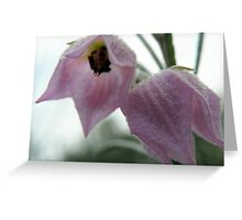 Lilac Bonnet Greeting Card