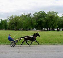 At the horse park in Paducah, KY. by kentuckashee