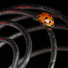 Lady Bug Lost by Corri Gryting Gutzman